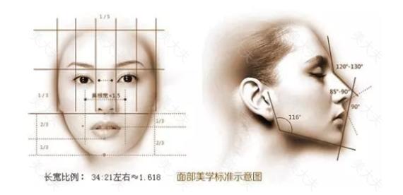 神秘的脂肪第四期:面部网格分区与术前美学评估